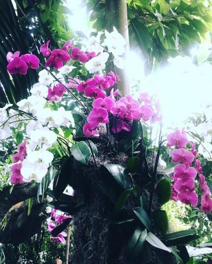 botanicalgarden2