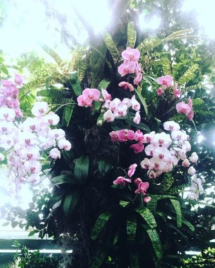 botanicalgarden3